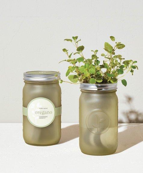 Modern sprout Kit Pot Mason - Origan
