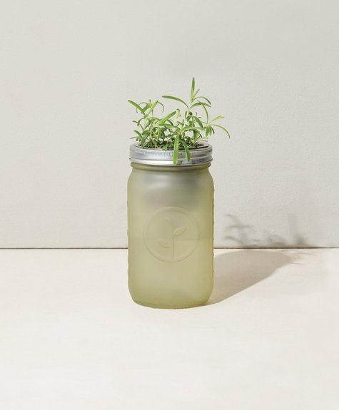 Modern sprout Mason jar kit - Rosemary