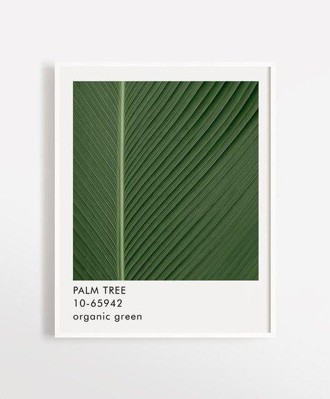 Opale Affiche 12x16 Opale - Palm Tree