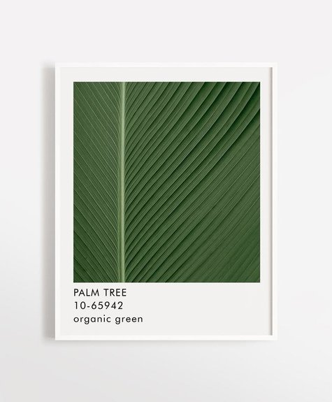 Opale Poster 12x16 Opale - Palm Tree