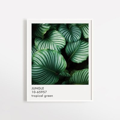 Opale Poster - Jungle (8x10)