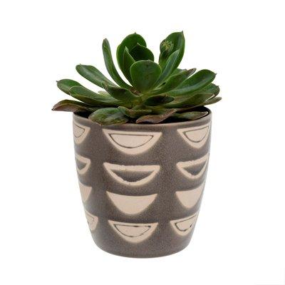 Indaba Luna Pot