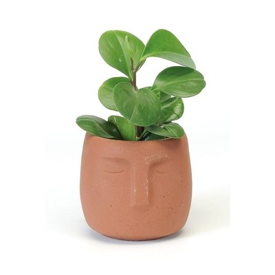Bacon Basket Limited Face planter - Terracotta