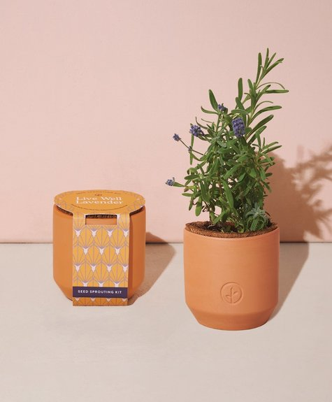 Modern sprout Mini Planter- Live Well Lavender