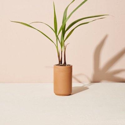 Modern sprout Kit Terracotta - Palmier