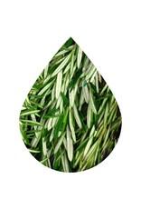 Fused Wild Rosemary