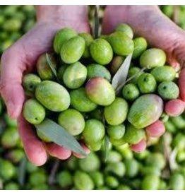 Organic Chetoui-Robust (Tunisia)Crush Date: Nov.2019
