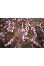 Cascadian Wild Raspberry White Balsamic