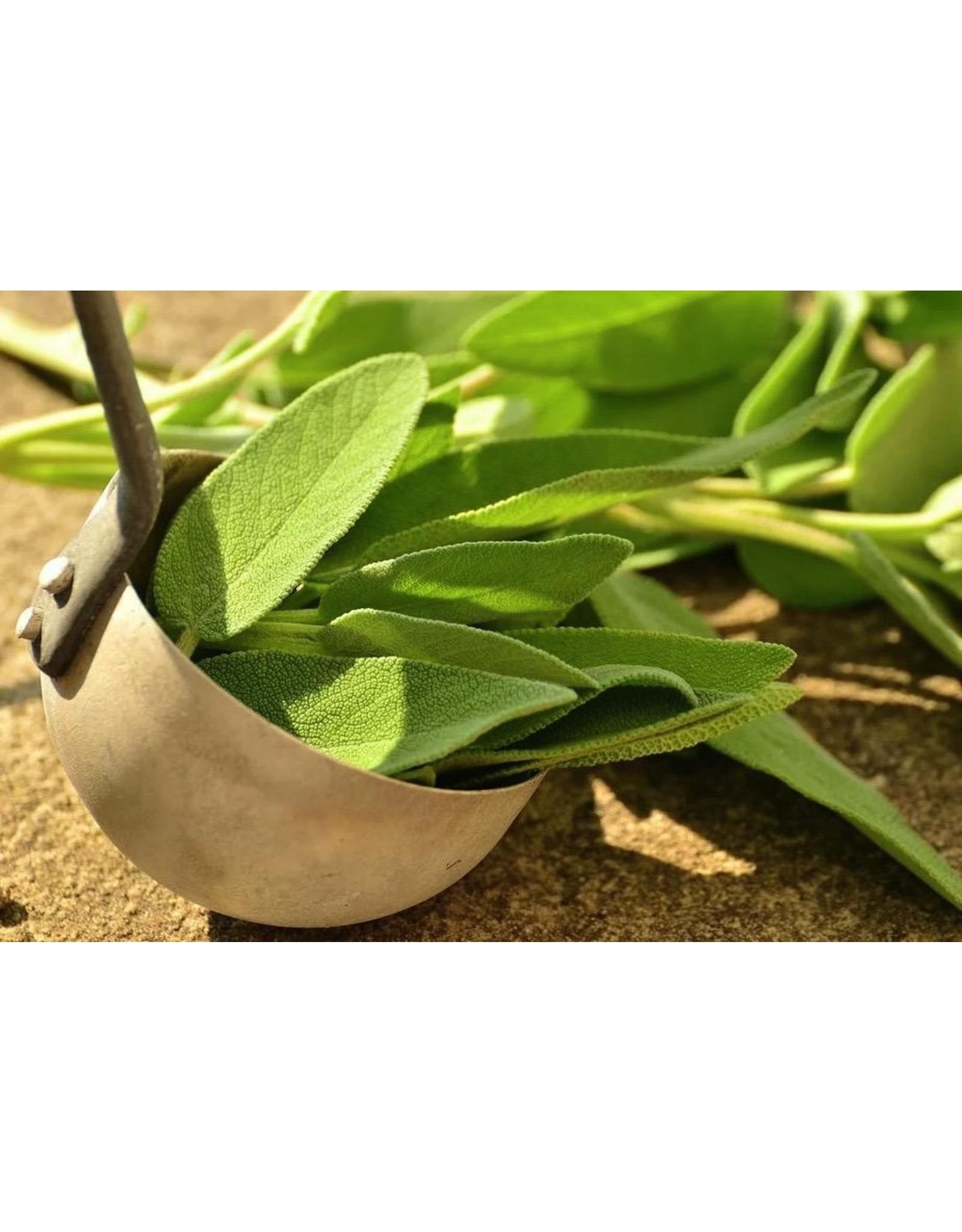 Fused Greek Sage Olive Oil