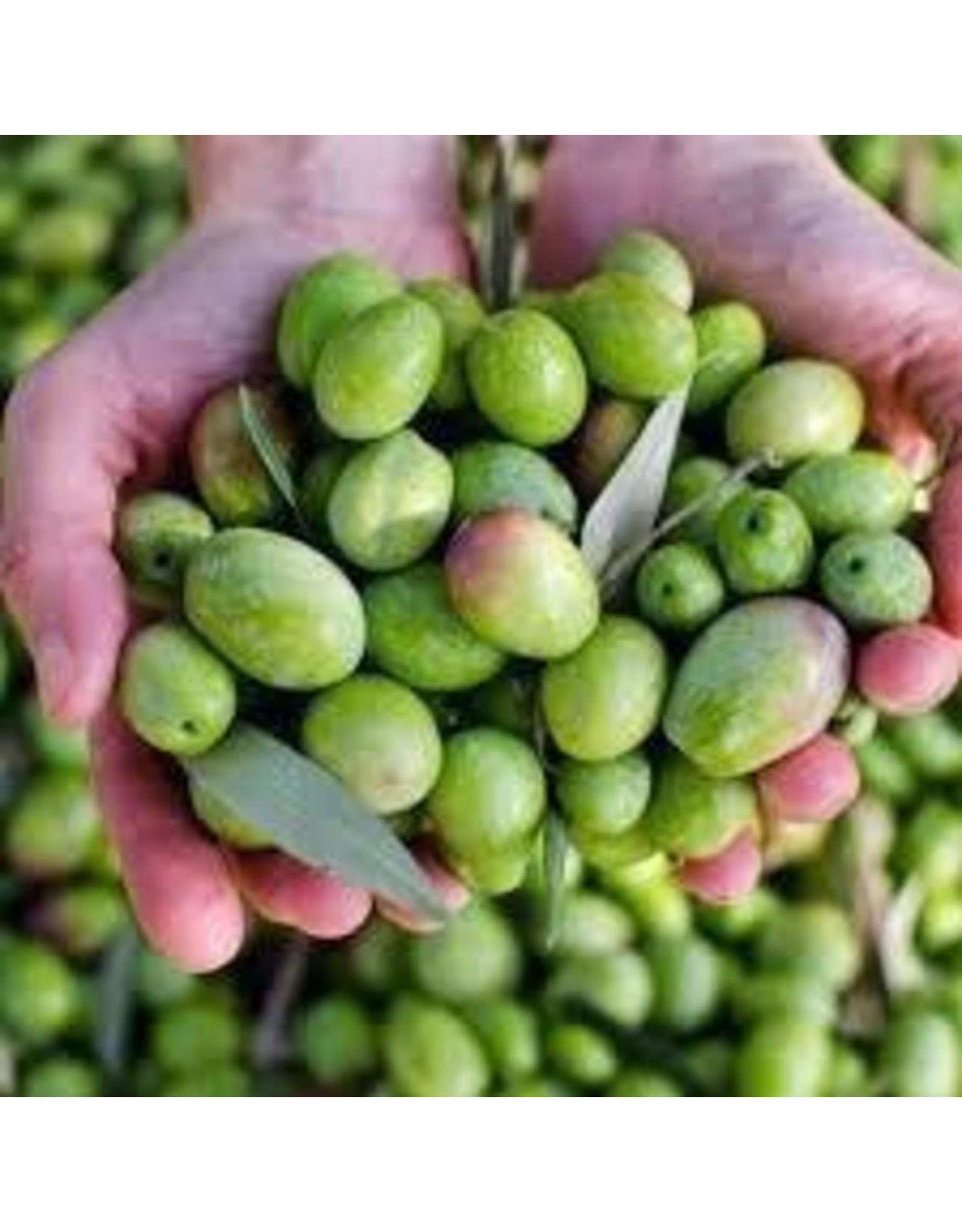 Organic Chetoui-Robust (Tunisia)Crush Date: Nov.2020