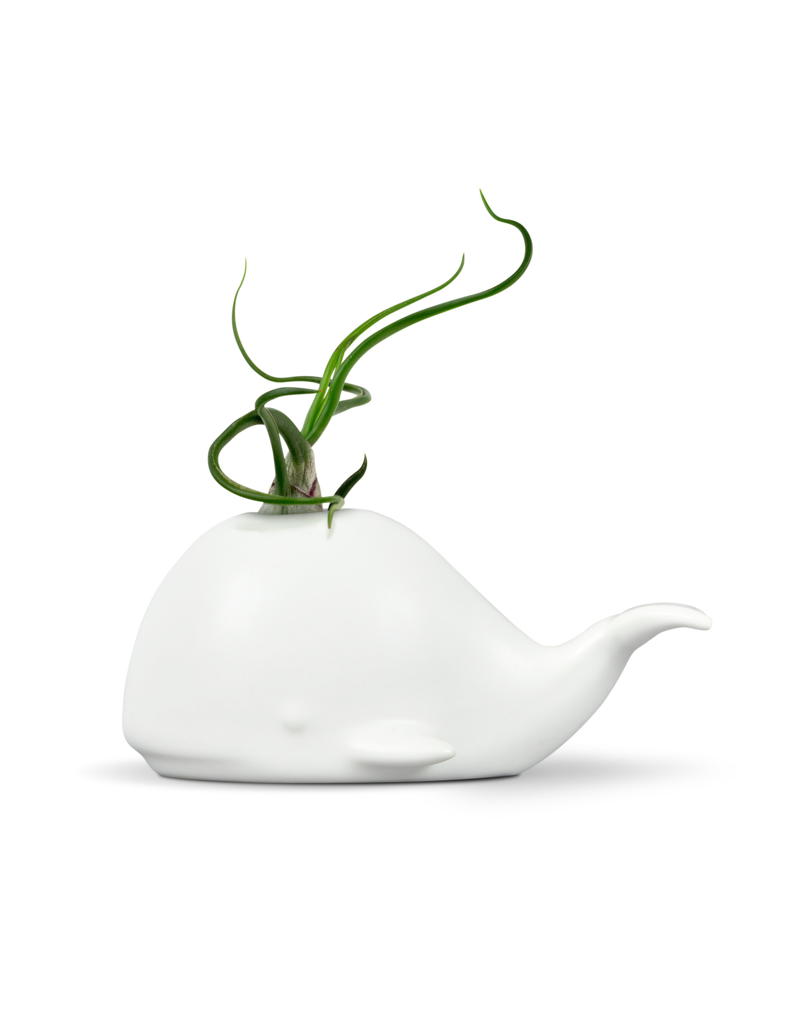 Fred & Friends Fred Fancy Plants Holder - Whale