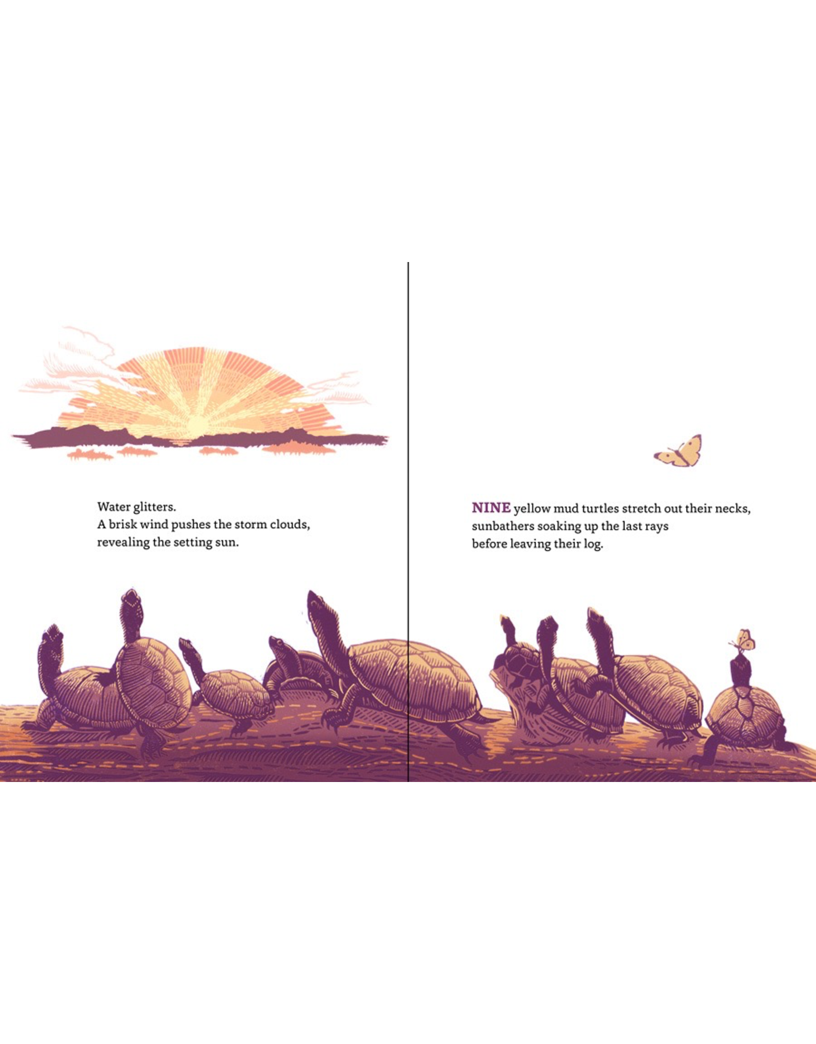 Pomegranate FOUR OTTERS TOBOGGAN: AN ANIMAL COUNTING BOOK