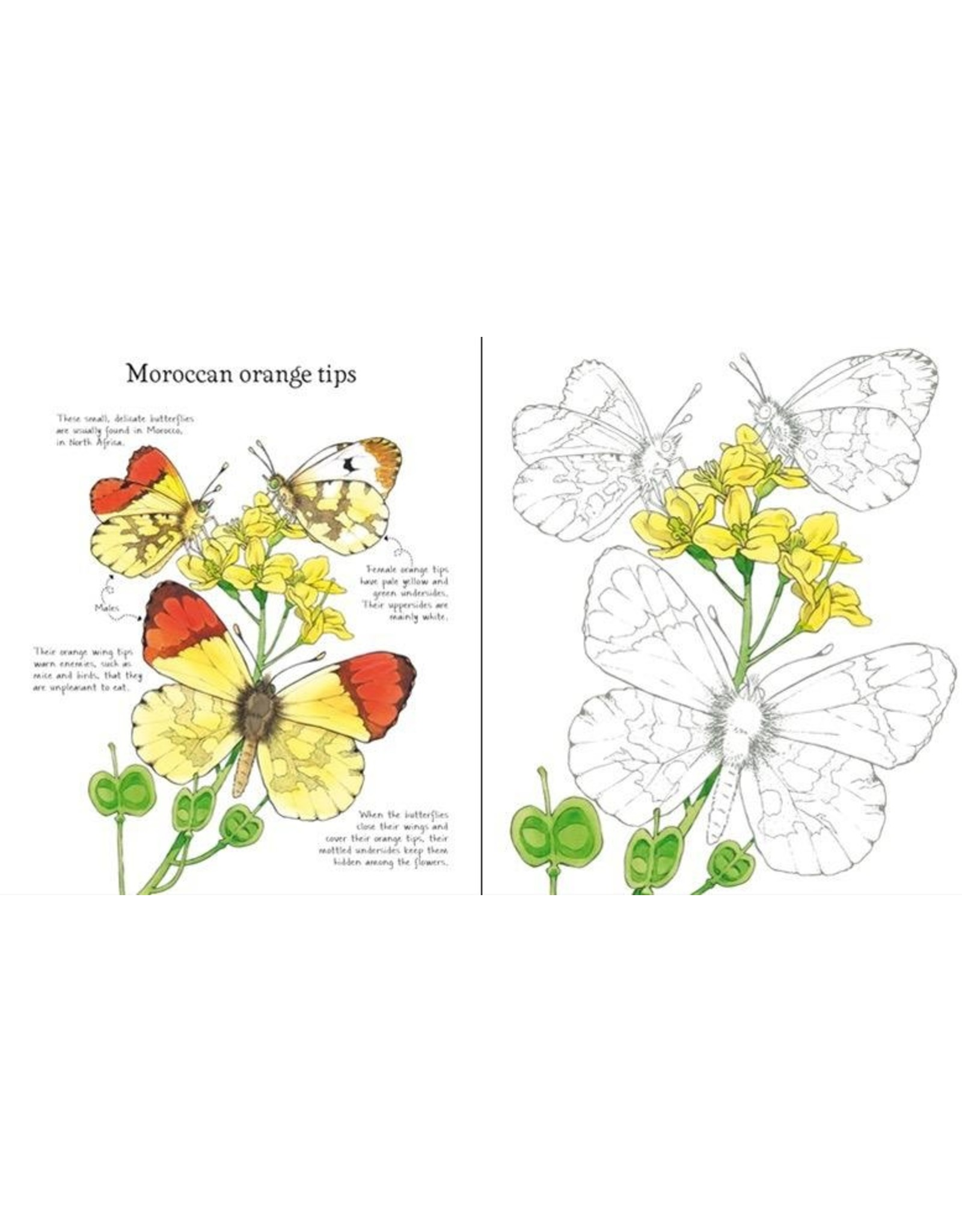 Usborne Butterflies To Colour