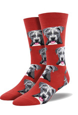 Pitbull  ( Socksmith Socks)