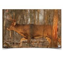 """37481 Birchwood Casey Ez-Scorer 23"""" x 35"""" Whitetail Deer - 2 pk folded"""