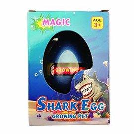 Growing Pet Shark Egg