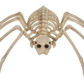Skeleton Spider, 14""