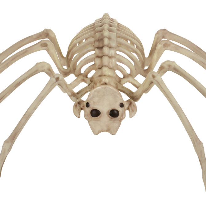 "Skeleton Spider, 14"""
