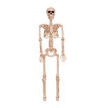 """36"""" Posable Skeleton"""
