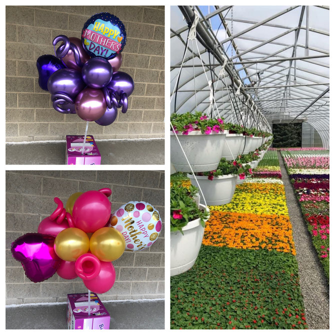 Mother's Day Deal - balloon yard stake,  and hanging basket ( flat of flowers sold out)