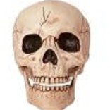 "6"" Skull with Moveable Jaw"