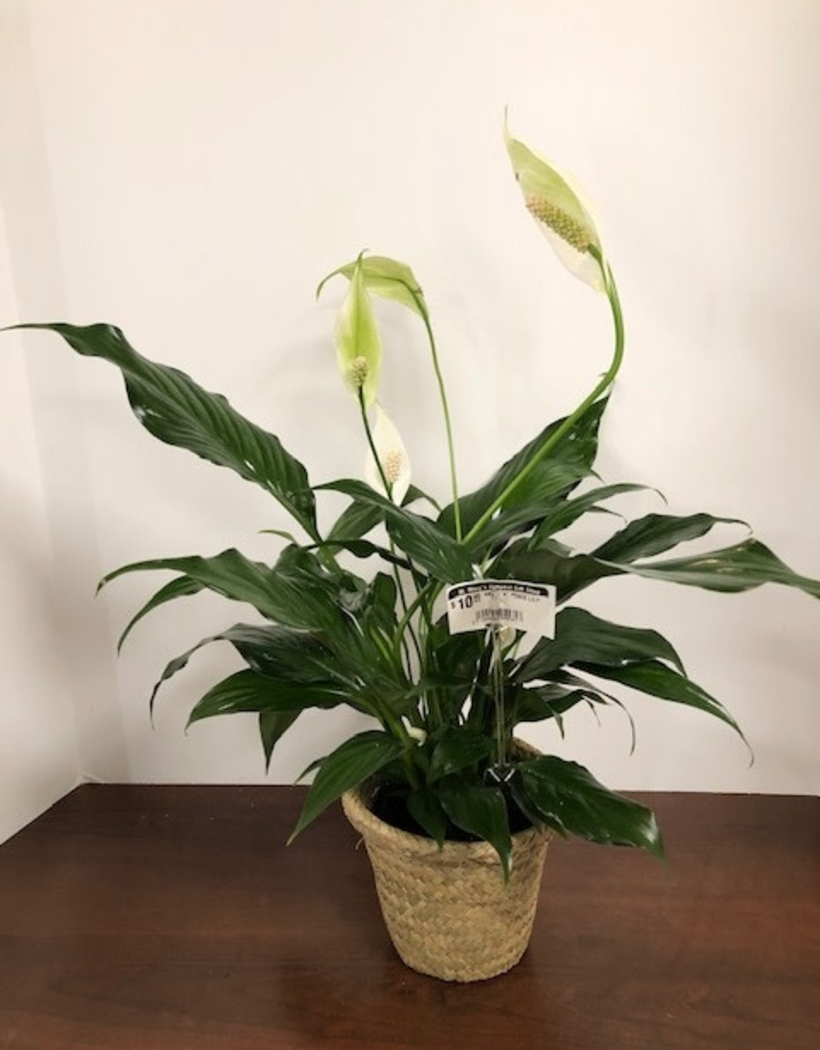 """ABS - 4"""" PEACE LILY"""