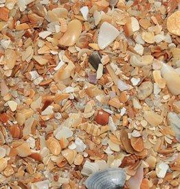 Dune Jewelry Beach Charm - Palm Tree - Hammock Beach