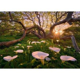Heye PZ1000 Calla clearing, Magic Forest