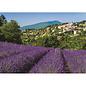 Jumbo PZ500 Provence, Aurel
