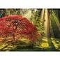 Heye PZ1000 Guiding Light, Magic Forest