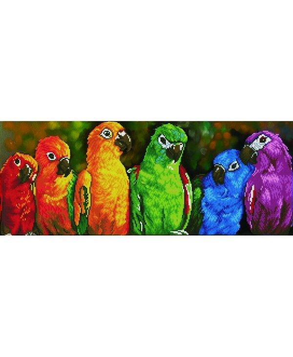 Dotz - Rainbow Parrots