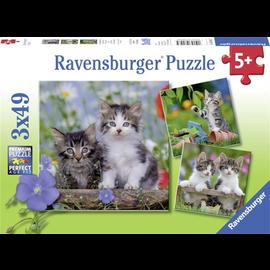 PZ3X49 Kittens