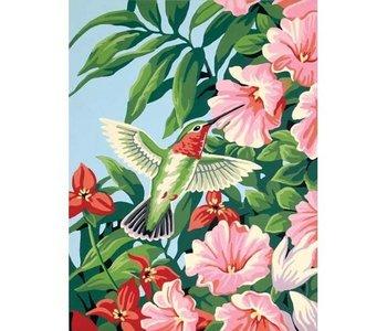 Colibri et Fuchsias