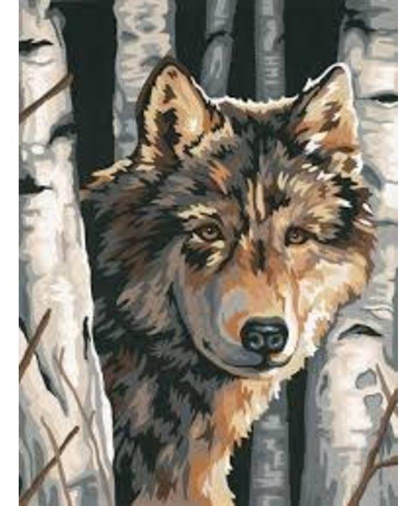 Loup et bouleaux