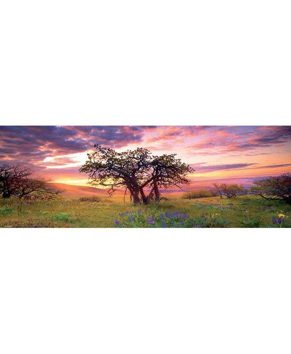 PZ2000V Oak Tree, Humboldt