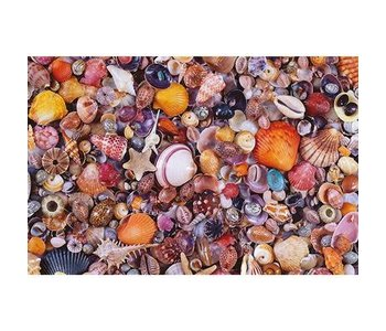 PZ1000 Sea Shells