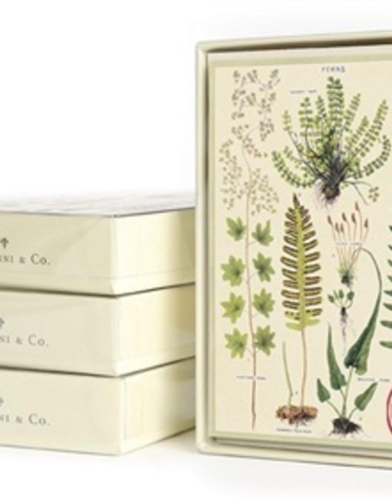 Cavallini Cavallini Boxed Everyday Note Cards