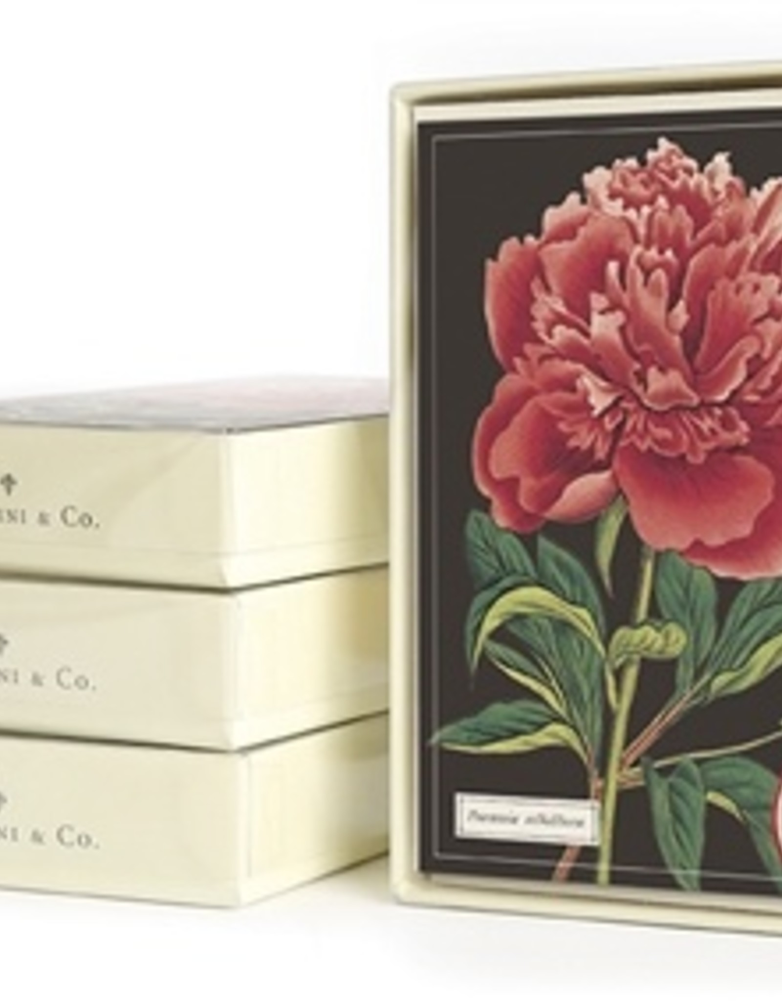 Cavallini Cavallini Boxed Everyday Note Cards