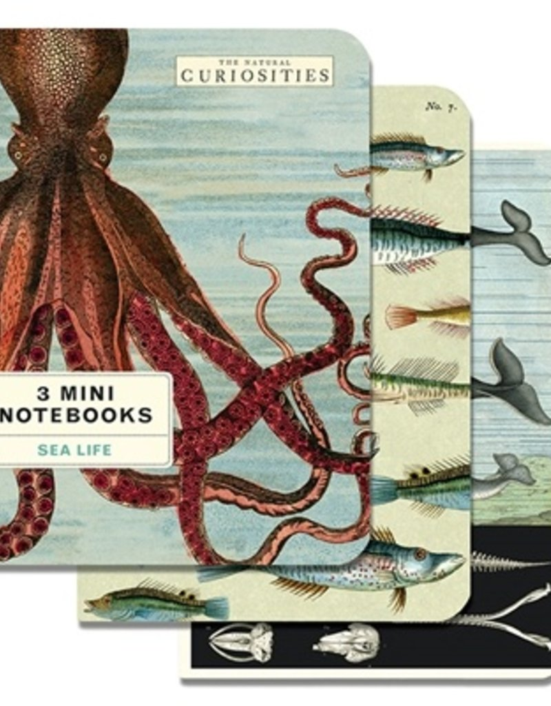Cavallini Cavallini Mini Notebook Set