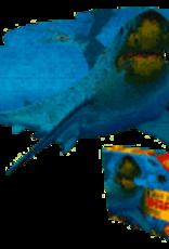 I am lil Shark Puzzle
