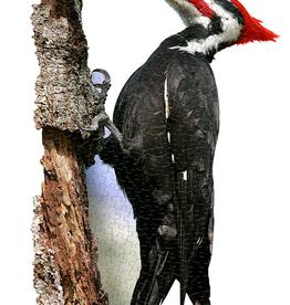 I am Woodpecker