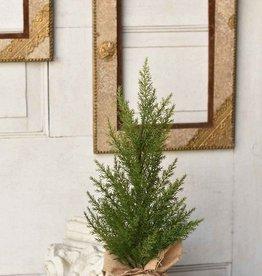 """Fine Cedar Tree - 18"""""""