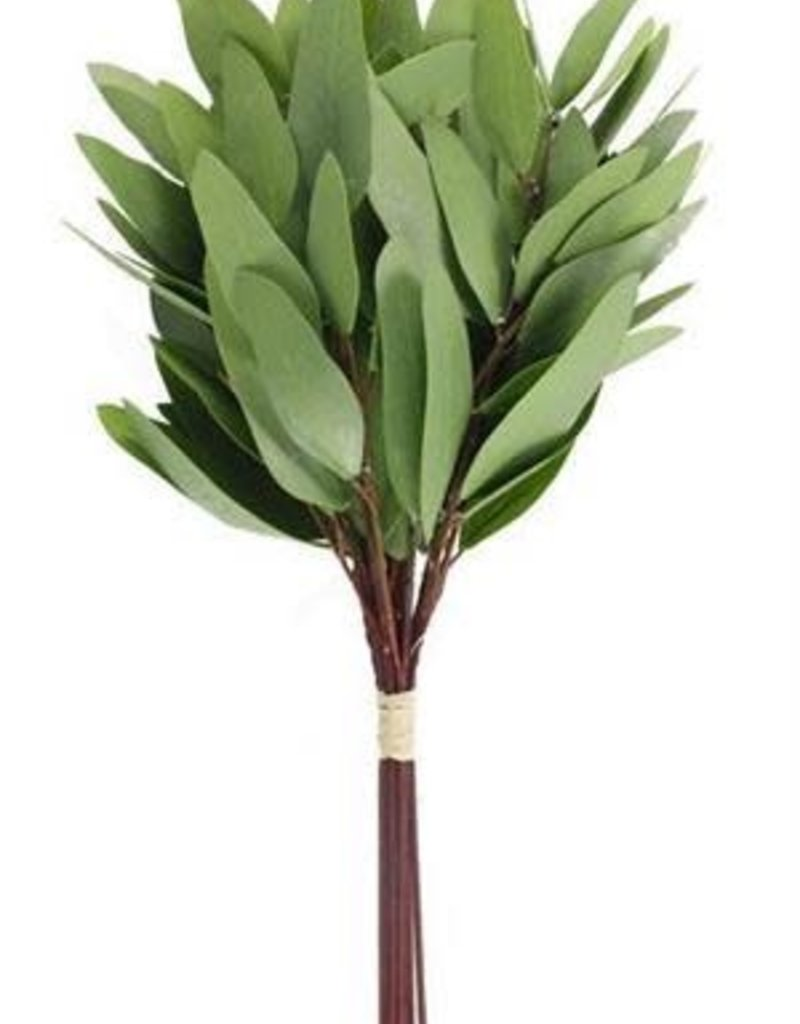 Green Eucalyptus Bunch- 12 Stems