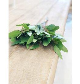 Eucalyptus Bunch- 12 Stems