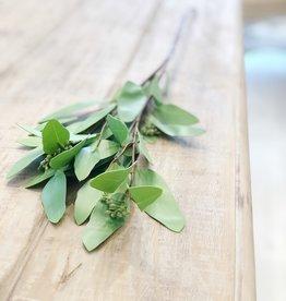 """32"""" Eucalyptus Spray - Green"""
