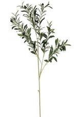 "Green Olive Spray 40"" Long"