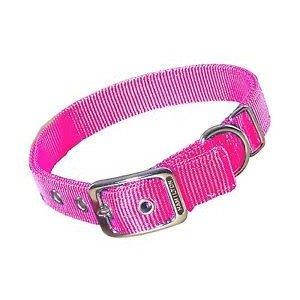 Hamilton 3/4in Nylon Dog Collar