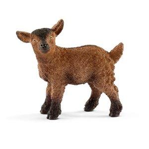 Brown Goat Kid
