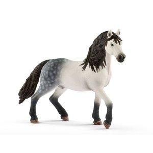 Andalusian Stallion