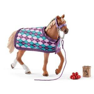 English Thoroughbred w/ Blanket